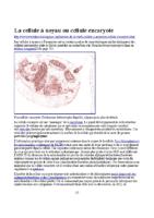 La cellule à noyau ou cellule eucaryote